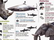 Especies animales peligro #Infografía #Animales #Ambiental