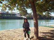 poesía árbol hojas sombra