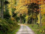 Forestal sector clave Mundial Medio Ambiente