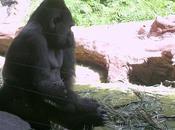 Hacer mono
