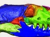 nueva especie ilumina evolución culebrillas ciegas Europa