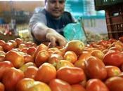Perdidas multimillonarias deja cosecha tomates productores morán