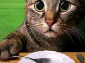 Vegetarianos matan gatito darle carne