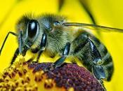 insectos seres sintientes
