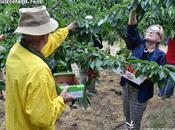 Agroturismo bate récords Jerte