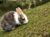 Conejo: características nombres