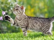 Gato: características nombres