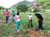 Ministerio Ambiente crea bosque forestal diverso Nueva Esparta