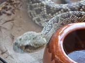 466: piel serpiente también #sanjuan.
