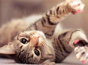 Cómo cuidar gato