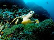 Tortugas marinas lesionadas recuperan salud rehabilitación