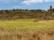 comarca Tierras Burgo