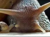 Guia para cuidado caracol mascota