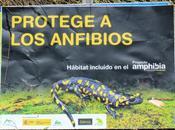 Voluntariado Yeste arreglando cuerpo agua para salamandras