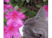 Plantas interior seguras para gatos