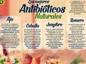 mejores antibióticos naturales #Infografía #Salud #Alimentación