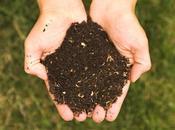 Abono orgánico. Cómo obtener buen compost
