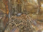 crisis vivienda aves