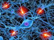 ¿cómo afecta miedo neuronas dolor espalda?