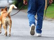 ¿Cómo pasear correctamente perro?