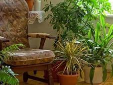 Hierbas plantas deben faltar hogar