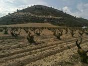 Vendimia, Ribera Duero 2014