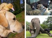 Amistades animales inusuales
