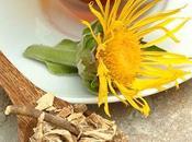 Enula combate lombrices intestinales, diurético