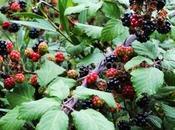 Recogiendo bosque frutos silvestres otoño