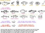 Cantidad Mercurio diferentes pescados