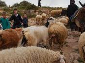 Israel anuncia mayor expropiación tierras Cisjordania últimos años
