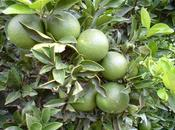 campo naranjas Barraca d'Aigües Vives