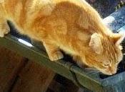 Cómo evitar denuncias vecinales molestias gato