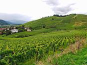 Ruta vino flores pueblos Alsacia