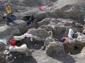 Descubierto dinosaurio terrestre pesado mundo