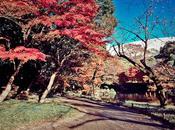 Koishikawa Korakuen (小石川後楽園)