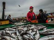 """Campaña """"Que vendan pescá"""" llega salas venta supermercados"""