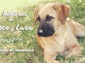 historia Choco Lura. Adopción mascotas