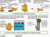obesidad gato #Infografía #Salud #Mascotas