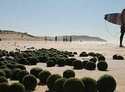 dónde salido estos 'huevos alienígenas' verdes playa Australia?