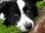edad cambia capacidad atención perro