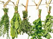 Efectos plantas medicinales organismo