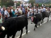 Este sábado Carmona recupera tradicional pasá vacas tudancas.