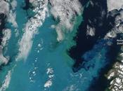 cambio climático revuelve cadena alimentaria Ártico