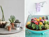 nueva obsesión: decorar cactus