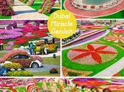 Conoce Dubai Miracle Garden