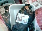 misterioso Pollo Negro