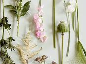 Botanica decoración: tendencia auge