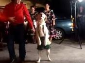 Impresionante Perro Baila Salsa