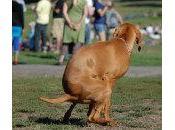 estreñimiento perros: Causas Tratamiento